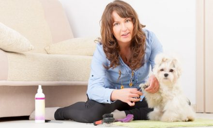 Top Tips for Grooming a Dog