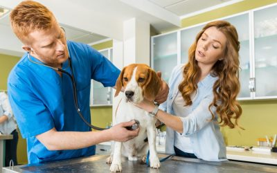 What Causes an Upset Stomach in Dogs?