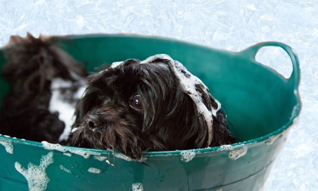 Tips on Giving Your Dog a Bath