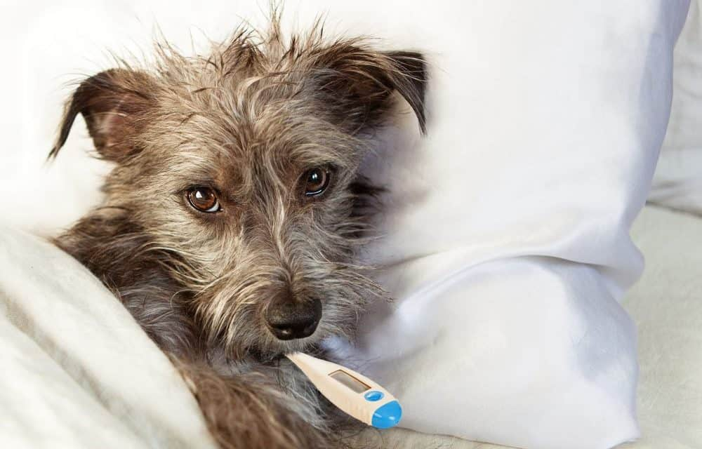 Is your dog acting weird? It could be a sign your dog is sick